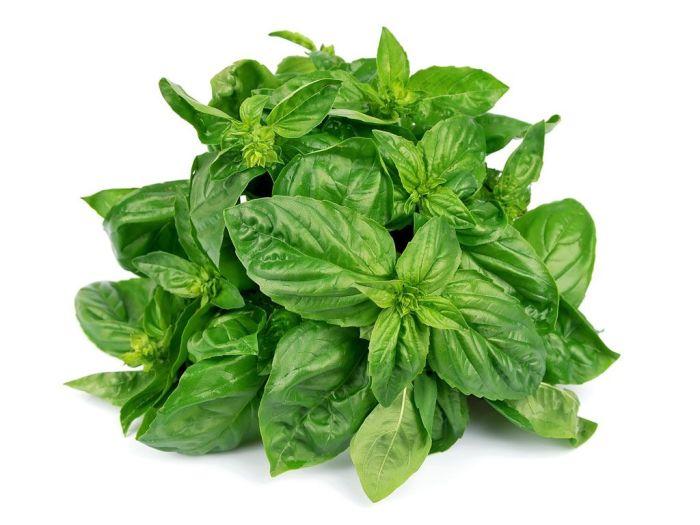Базилік зелений 50г - FreshMart
