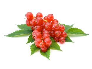 Смородина красная 150г - FreshMart