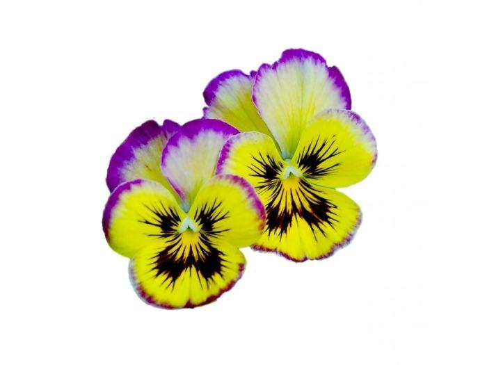 Цветы виолы съедобные 30 шт. - FreshMart